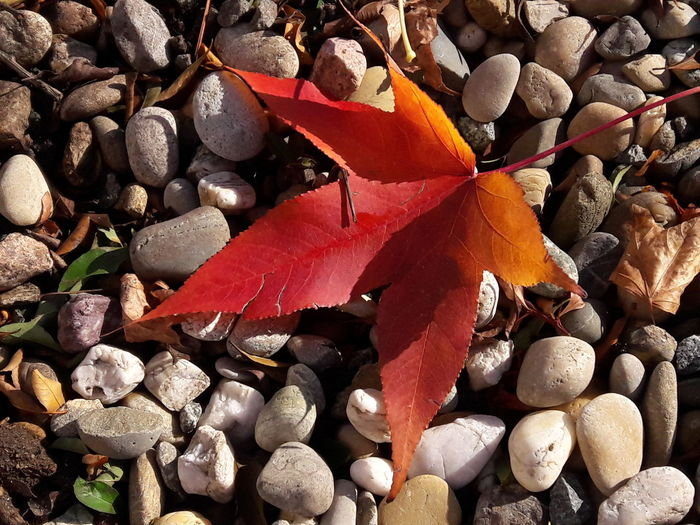 Outdoors Autumn Autumn Leaves Autumn🍁🍁🍁 EyeEmNewHere First Eyeem Photo EyeEm Nature Lover Smartphonephotography Colorful Orange Color Leaf Full Frame Backgrounds Autumn Close-up Growing Stone - Object Leaves Leaf Vein Maple Leaf Fallen My Best Photo
