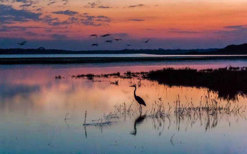 Silhouette Heron In Lake During Sunset