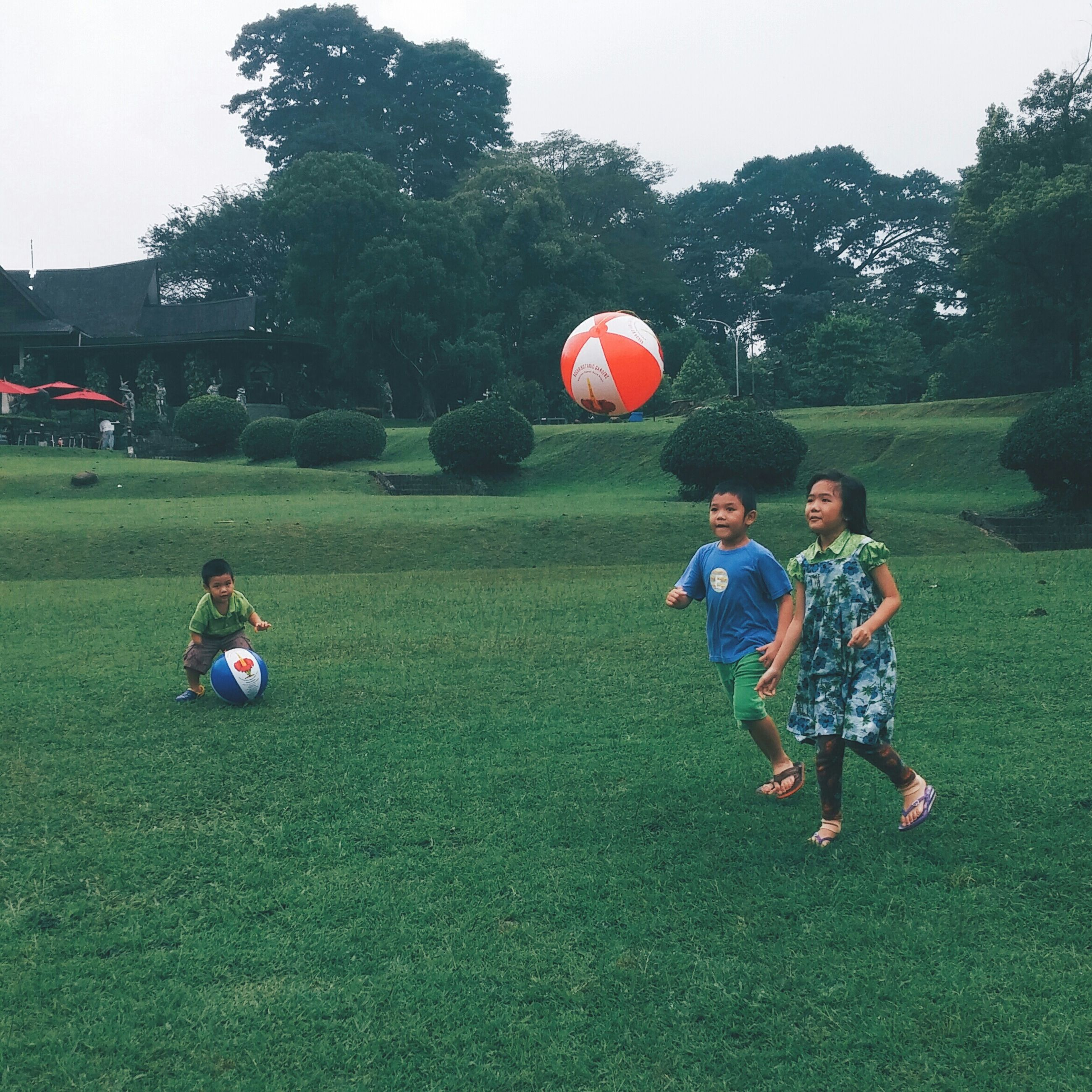 grass, childhood, leisure activity, lifestyles, boys, field, green color, grassy, elementary age, girls, casual clothing, full length, playing, sport, playful, fun, tree, togetherness