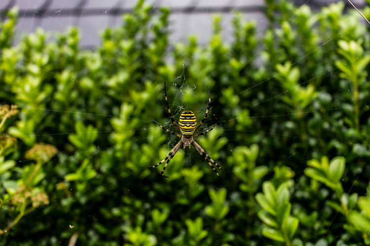 wasp spider Spider Baum Fotografie Wetter Weather Lights Licht Nature Tree Natur Colorful Green Farbenfroh Ast Wasp Spinne Full Length Insect Spider Spider Web Close-up Animal Themes