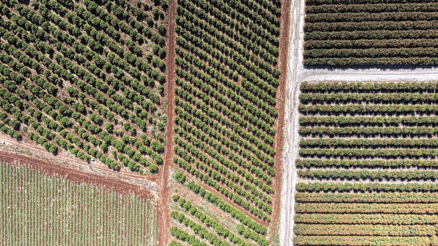 Full frame shot of vineyard