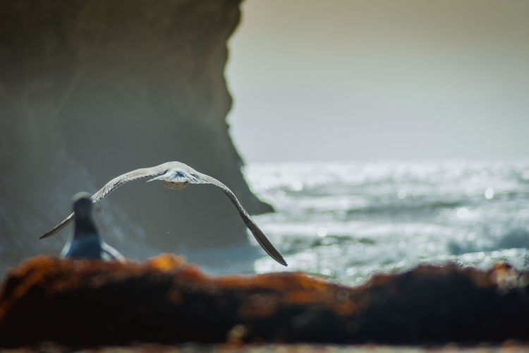 Seagull Swimming Over Sea Against Sky