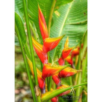 Color_n_nature Caribbean Natureshots Nature_shooters Nothingisordinary_ Grenada Islandlivity Ig_caribbean Ig_clubaward Westindies_pictures Westindies_colors Wu_caribbean Hdr_captures Hdr_pics Hdr_dominicanrepublic HDR