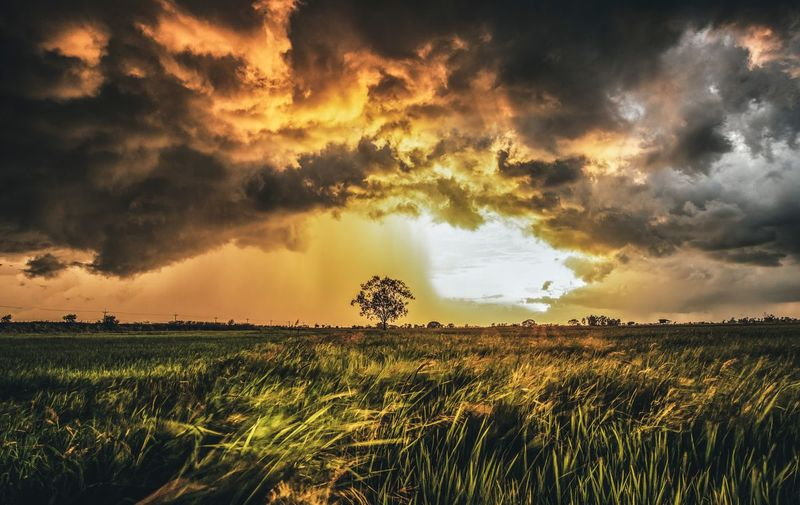 STORM CLOUDS AT SUNSET Sunrise Dark Strom Sunrise Sky Cloud - Sky Field Beauty In Nature Scenics - Nature Plant Landscape Land Tranquility Growth Nature Sunset Farm Crop  Environment Tranquil Scene Rural Scene