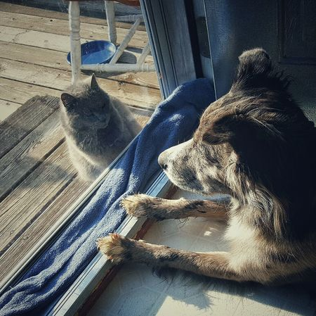 Showcase: February -miko & Jazzman- Wanting In Wanting Out Sunbathing Move Your Blocking The View Cat♡ Dog❤ Im Going To Get You Predator Vs Predator Staring Contest Starting At The Enemy Animal Photography Eyeem Animal Lover Animal Portrait