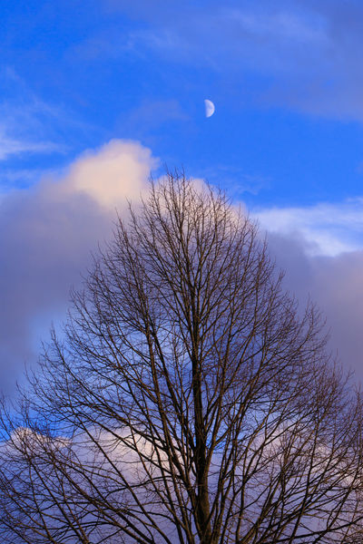 Romantic Dutch landscape with December evening sky, the Moon and a linden tree EyeEmNewHere First Quarter New Moon, Phase = Waxing Nature Photography Romantic Landscape Romantic Mood Art For Home Bare Tree Beauty In Nature Branch Color Blue December Sky Fairy Tale Forest Fine Art Prints Half Moon Linden Tree Moon Mysterious Landscape Nature In Holland Outdoors Picturesque Scenics The Moon Tranquil Scene Tranquility Tree