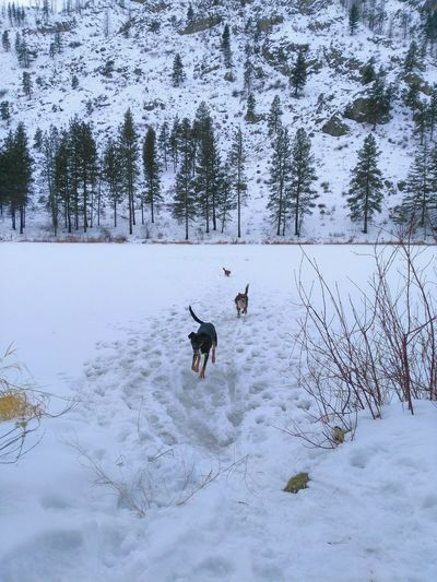 Outdoors Pets Animal Themes No People One Animal Nature Mammal Snow Domestic Animals Winter Cold Temperature Tree Day Dog Outing Animal Photography Motion Lake Landscape Cloud - Sky Dogs Non-urban Scene Frozen Lake Capture The Moment EyeEm Selects Lost In The Landscape