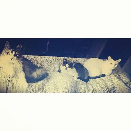 Furfamily Mykidsareawesome Catlover ♡ Blackandwhite Photography Popular Photos Family Time ♥