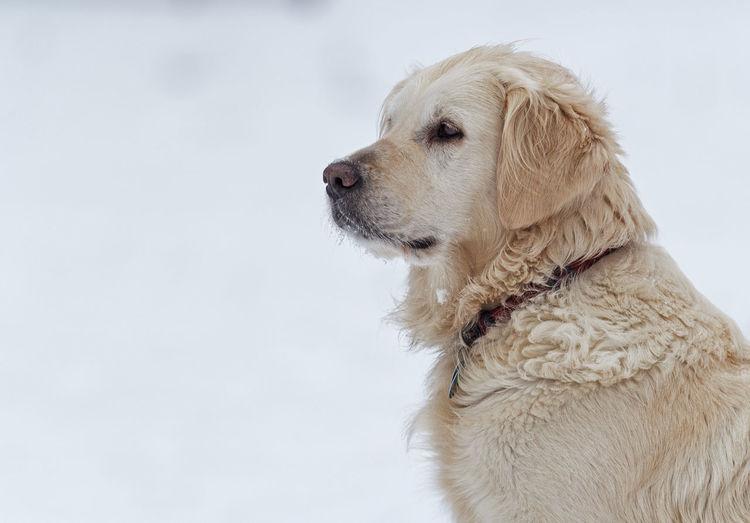 Close-up of dog against white background