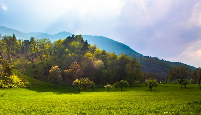 Tree Mountain Field Sky Grass Landscape Cloud - Sky Green Color Farmland