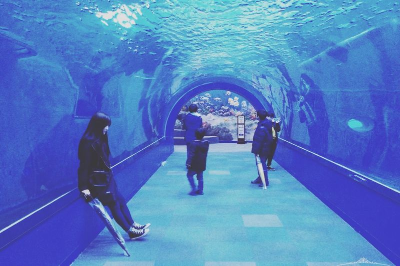 Aquarium Whale Museum