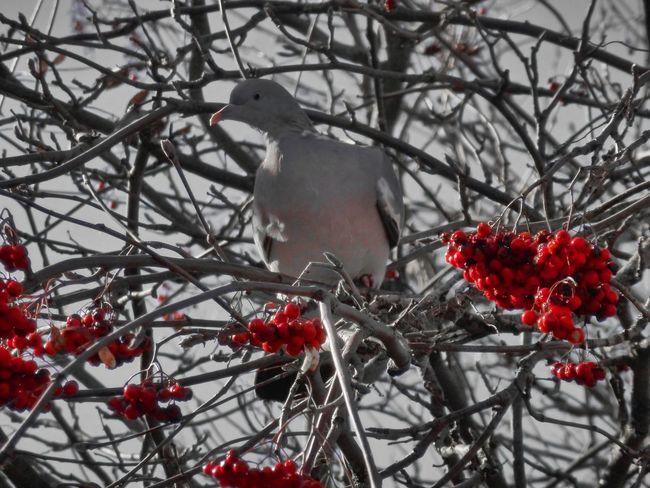 Autumn Bird Branch Outdoors Perching Tree