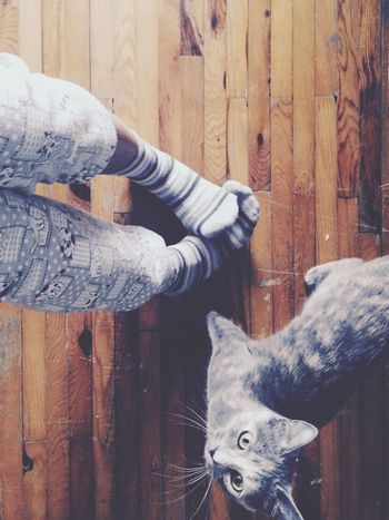 Cat EyeEm Best Shots Bestfriend Cat♡ Cat Lovers