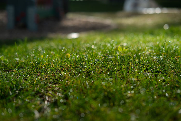 Green green grass Selective Focus Green Color Grass Plant Growth Nature Field No People Beauty In Nature Surface Level Land Close-up Day Outdoors Tranquility Wet Water Drop Sunlight Blade Of Grass Dew Purity Sustainable Resources Freshness Clean Energy