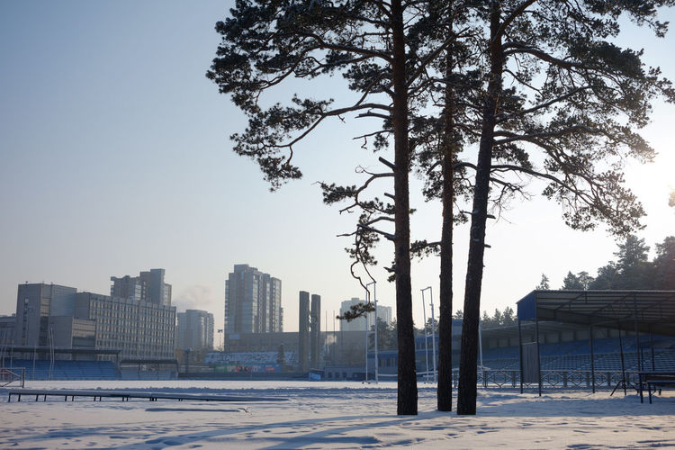 Trees and buildings against sky during winter
