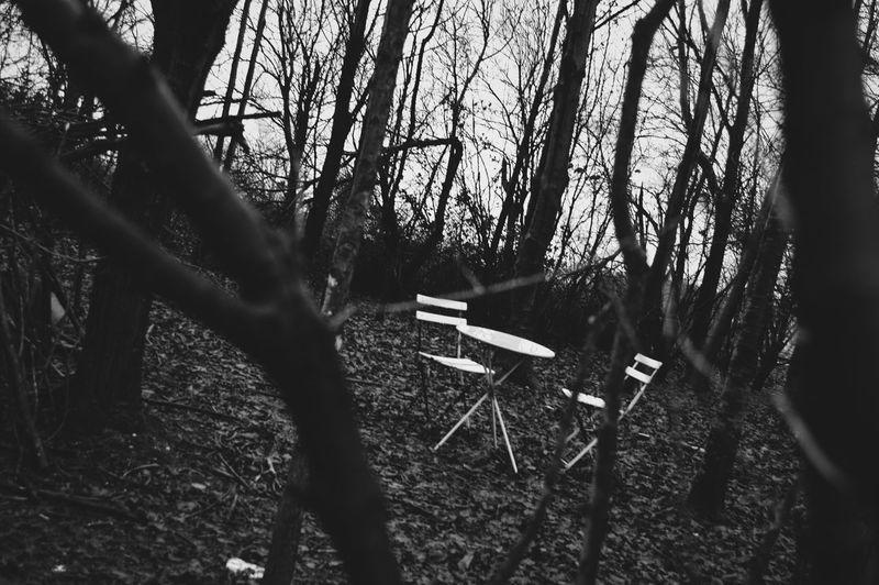 Alone Tree No