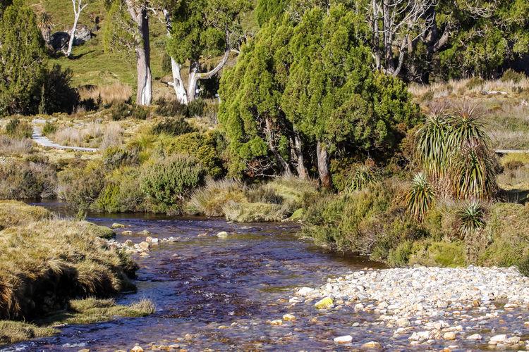 Scenery creek