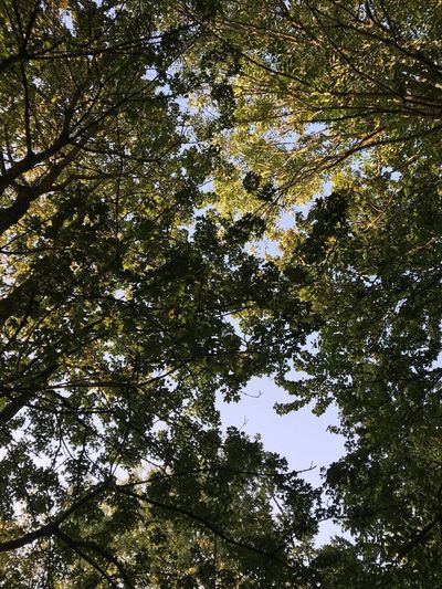 🍃🌳🍃 Tree Low Angle View Nature Forest Growth Day No People Beauty In Nature