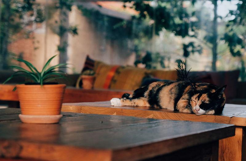 Cat sleeping on table