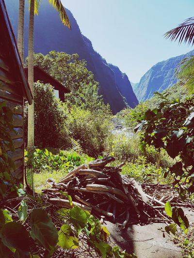 Hermite 👨🌾 Reunion Island EyeEmNewHere River Trail Running Cascade Sentier Alone Mountain Sky Close-up