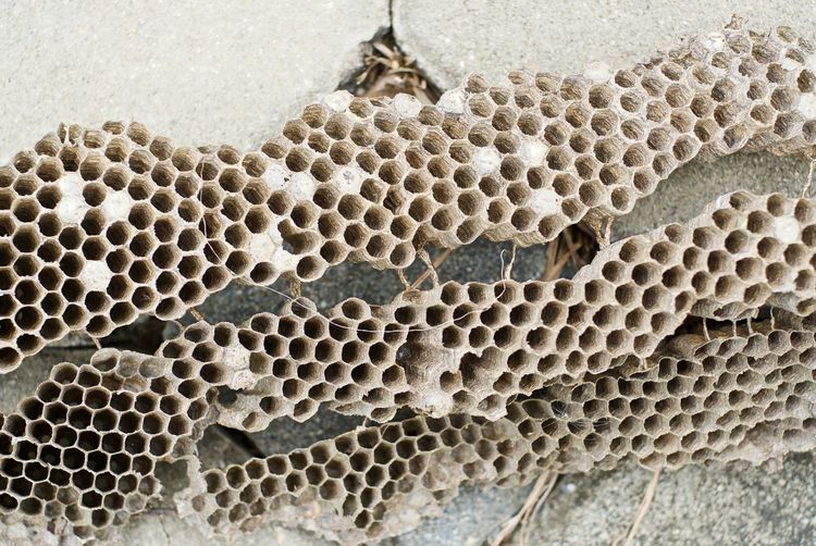 Close-Up Of Honeycomb On Wall