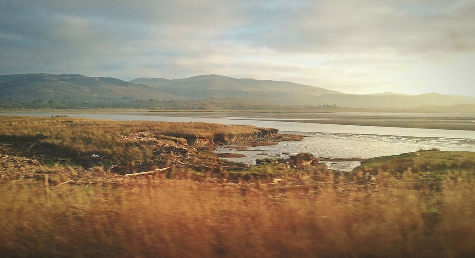 Near Aberdovey. .. River Wales Estuary Hills Reeds Water Train Ride река Landscape холмы