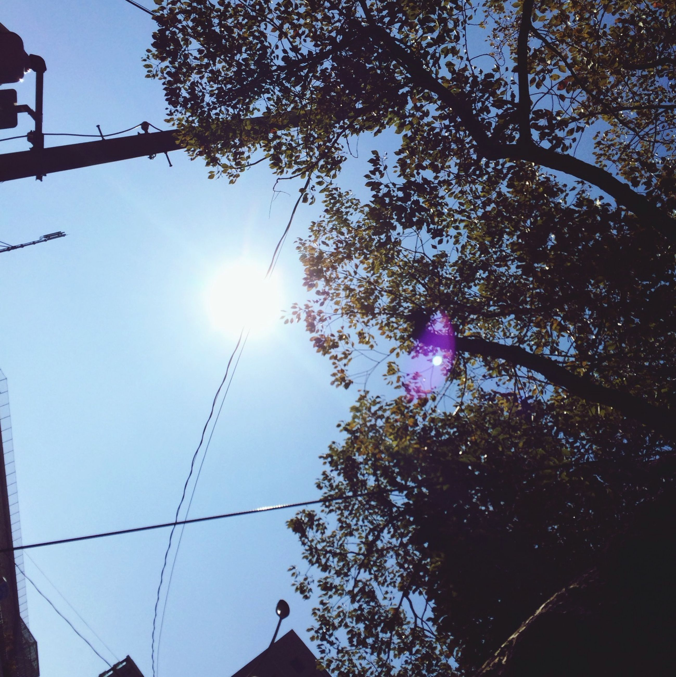 sun, low angle view, sunbeam, lens flare, sunlight, tree, silhouette, bright, sky, clear sky, nature, sunny, beauty in nature, branch, blue, outdoors, street light, growth, day, no people
