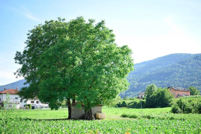 Tree Nature Green Peaceful Beautiful Nature Landscape Beauty In Nature Breathing Space