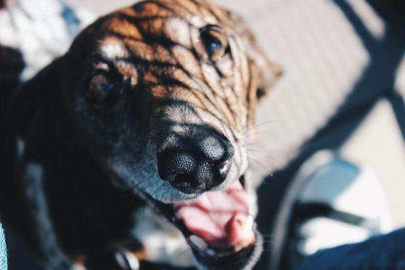 Hi Moonpie! Hi! Dogs Animals Cute Pets Glitch