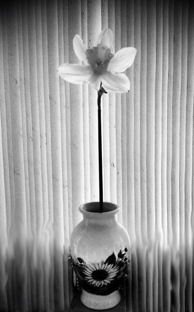 I never feel alone bcoz loneliness is always with me 😊 Flowers Blackandwhite Taking Photos Andrography Spring Flowers Monochrome Fortheloveofblackandwhite Flowerporn Eye4photography  Flower Collection Bw_collection Flowerslovers PhonePhotography EyeEm Best Shots - Black + White Photography Light And Shadow From My Point Of View