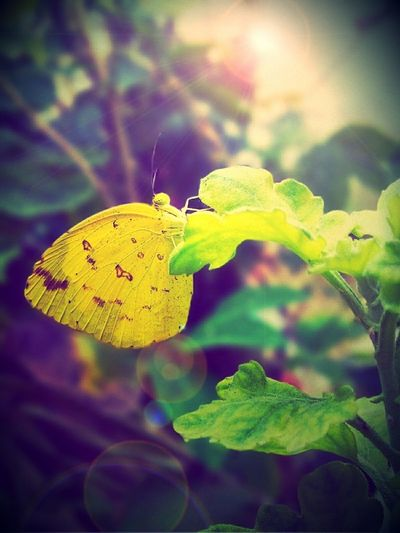 Garden Photography Butterfly ❤ Lovely Weather