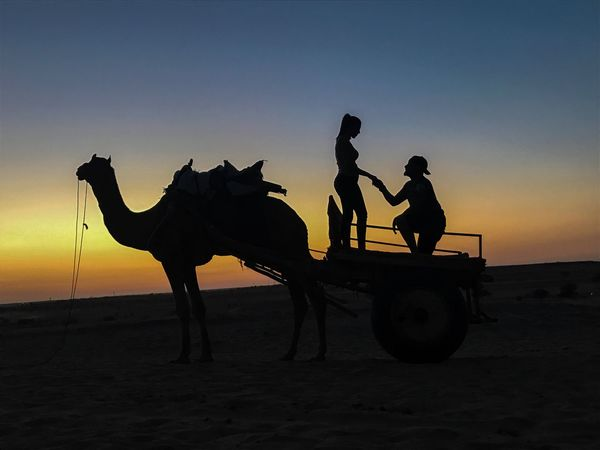 Camel Thar Desert Rajasthan Jaiselmerdiaries Love ♥ Sunset Landscape Adapted To The City Outdoors