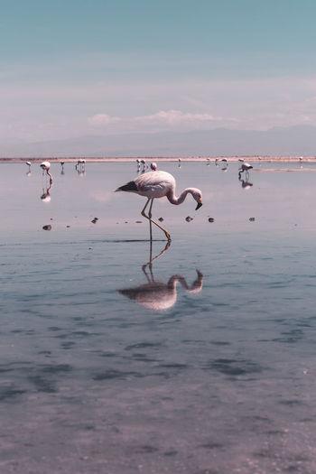 Birds in a sea