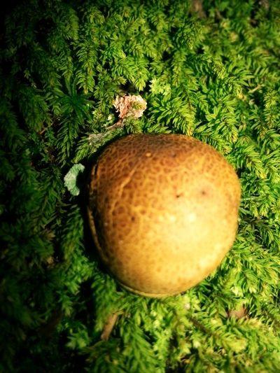 Mushroom きのこーのこのこ♪
