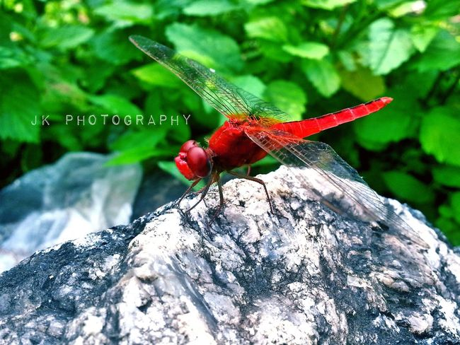I Found A Dragonfly. Dragonfly💛 Natural Beauty