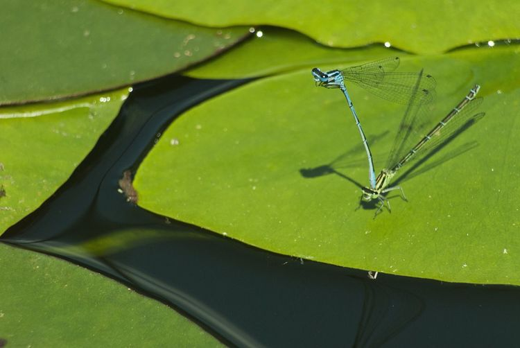 Close-up of insect on leaf floating on lake