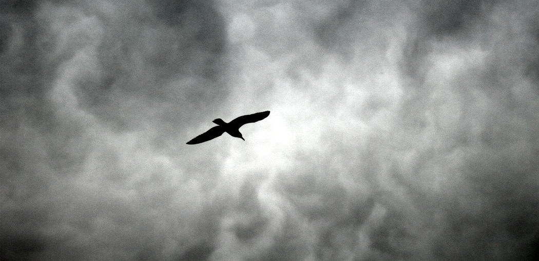 Animal Themes Animals In The Wild Bird Cielo Nuvoloso Cloud - Sky Flying Gabbiano Italy Low Angle View Milazzo Nature No People Outdoors Primavera Rumore Seagull Sicily Silhouette Silhouette Sky Spread Wings Spring Volcano