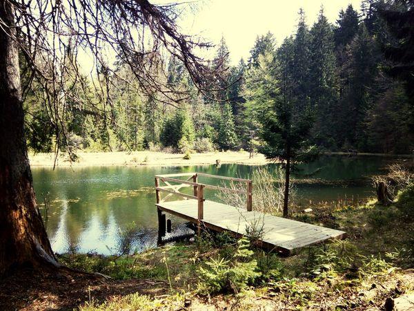 "Дикое озеро ""Озирце"". Karpathian Lake"