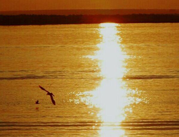 Sunset Bird Flying Water Reflection Scenics Nature Beauty In Nature Rioparana