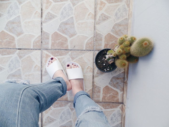 Low section of woman standing by potted cactus on floor at home