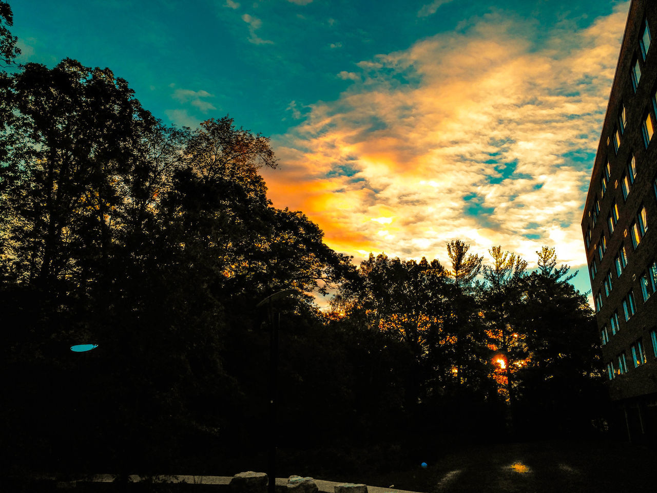 tree, sky, sunset, cloud - sky, silhouette, nature, beauty in nature, scenics, tranquil scene, no people, growth, tranquility, outdoors, low angle view, day