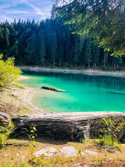 Tree Plant Water Beauty In Nature Tranquil Scene Tranquility Scenics - Nature Lake Idyllic Non-urban Scene Green Color Forest Nature Turquoise Colored