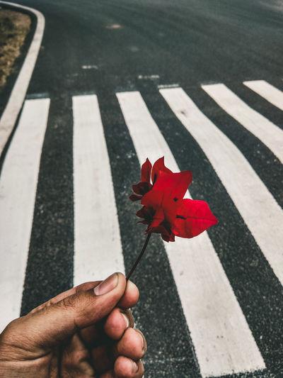 Crosswalk Flower Tones Handheld Flower On Hand Hand Holding Flower