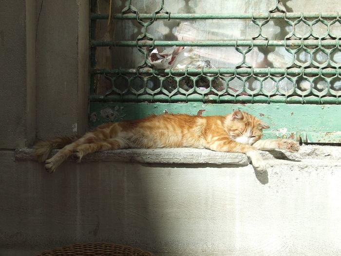 Cat sleeping on floor