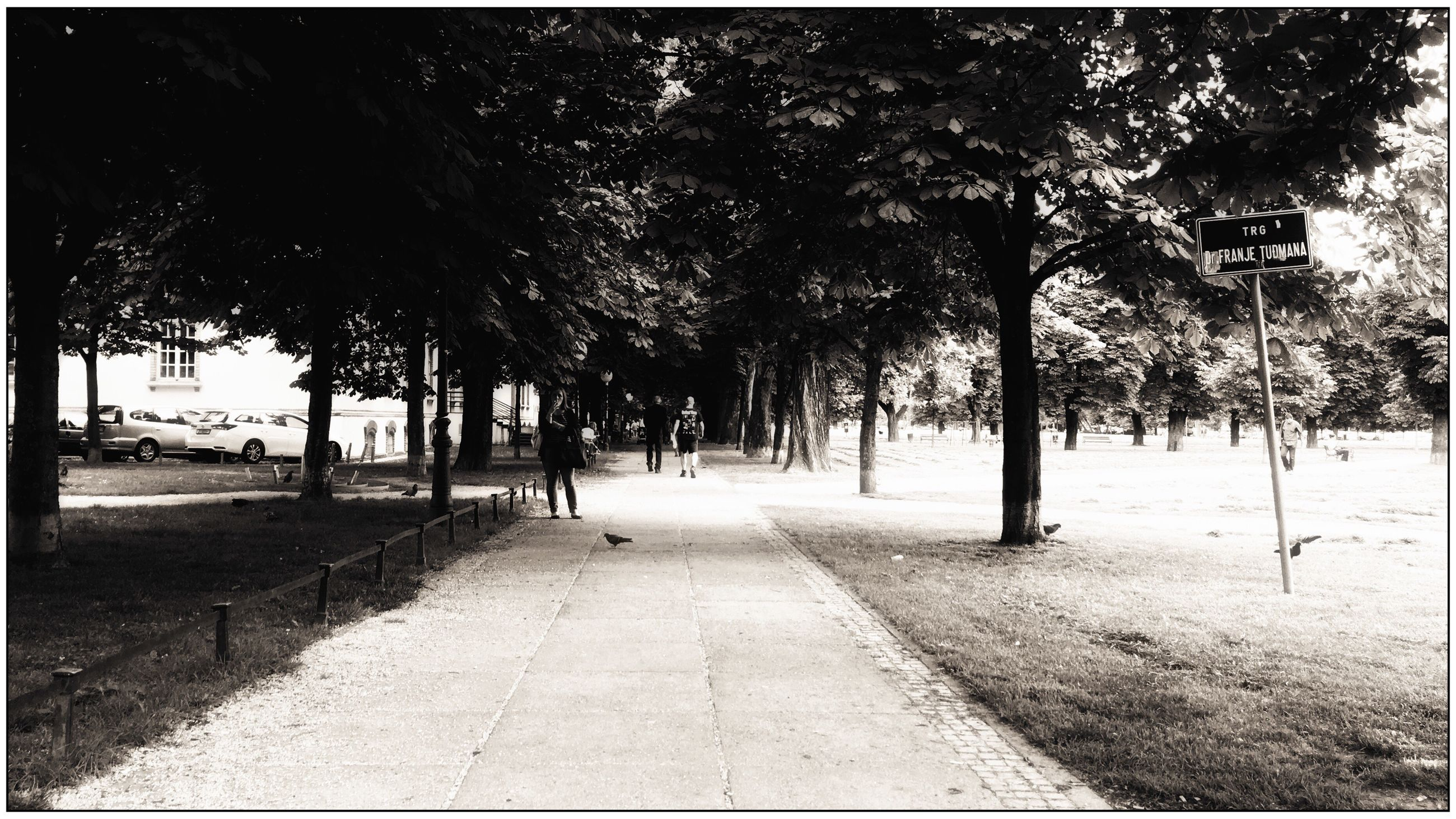 tree, transfer print, the way forward, auto post production filter, footpath, tranquility, shadow, diminishing perspective, tree trunk, growth, tranquil scene, treelined, road, nature, empty, sunlight, sky, scenics, day, outdoors