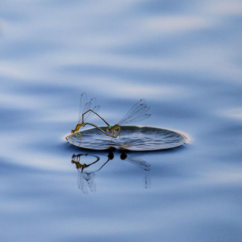 While kayaking, I noticed those two small Dragon Flies Beauty In Nature Bokeh Dragon Flies Insect Lake Love Nature Reflection Tranquility