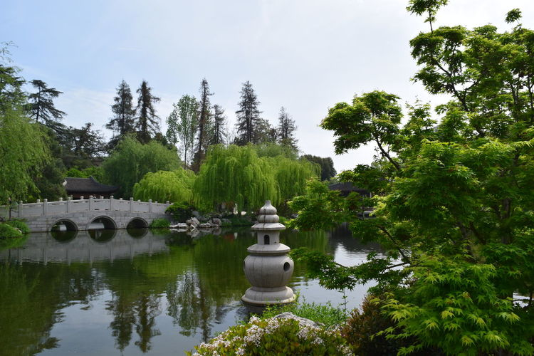 Amazing landscape at Huntington Library, Art Collections, and Botanical Gardens, California Beauty In Nature Calm Colorful Colors Colour Of Life EyeEm EyeEm Best Shots EyeEm Best Shots - Nature EyeEm Gallery EyeEm Masterclass EyeEm Nature Lover EyeEmBestPics Eyeemphotography Green Lake Landscape Lush Foliage Nature Outdoors Scenics Sky Tranquil Scene Tranquility Tree Water