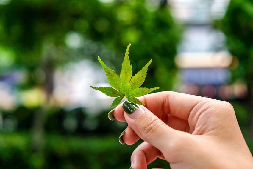 EyeEm Selects Human Hand Human Body Part Leaf Human Finger One Person Green Color Focus On Foreground Holding Real People Unrecognizable Person Plant Close-up Marijuana - Herbal Cannabis Outdoors Growth Day Nature Beauty In Nature Freshness People