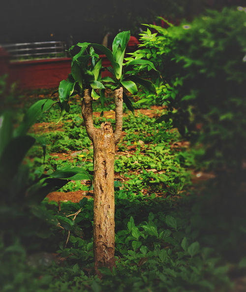 Beauty In Nature Close-up Day Fragility Freshness Green Color Growth Leaf Nature No People Outdoors Plant Tranquility Tree