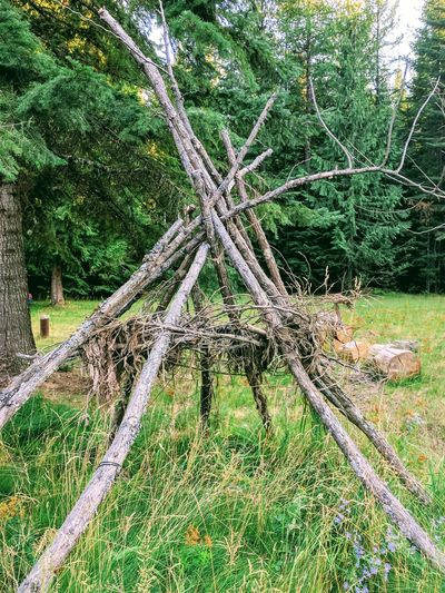 Yard art the old fasion way. Outdoors Forest No People Nature Branch Beauty In Nature Yard Art Teepee Indian DIY At Home Enjoying Life Idahobeauty Sandpoint Tree